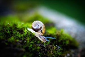 Is it OK to be a Snail?