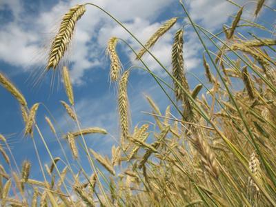 Do Athletes Need Grains to Get Enough Carbs?
